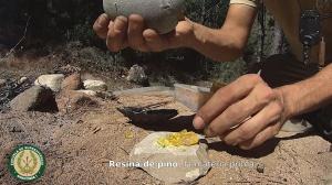 resina-de-pino