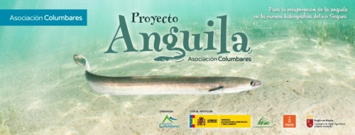 voluntariado-ambiental-26-noviembre-proyecto-anguila-asociacion-columbares-1